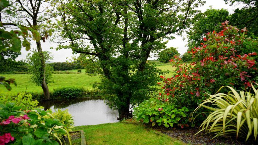 Boom planten in tuin